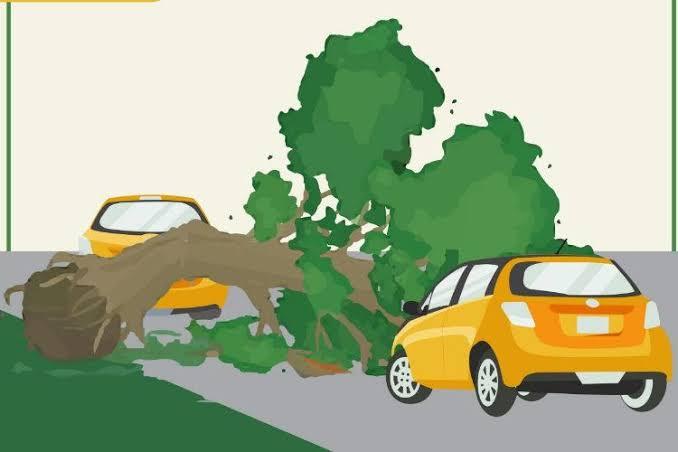 Pohon Tumbang Timpa 2 Mobil yang Melintas